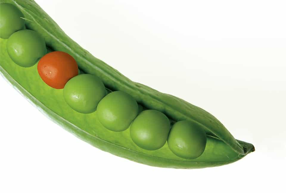 Dietitian Nutritonist- Shaws Simple Swaps