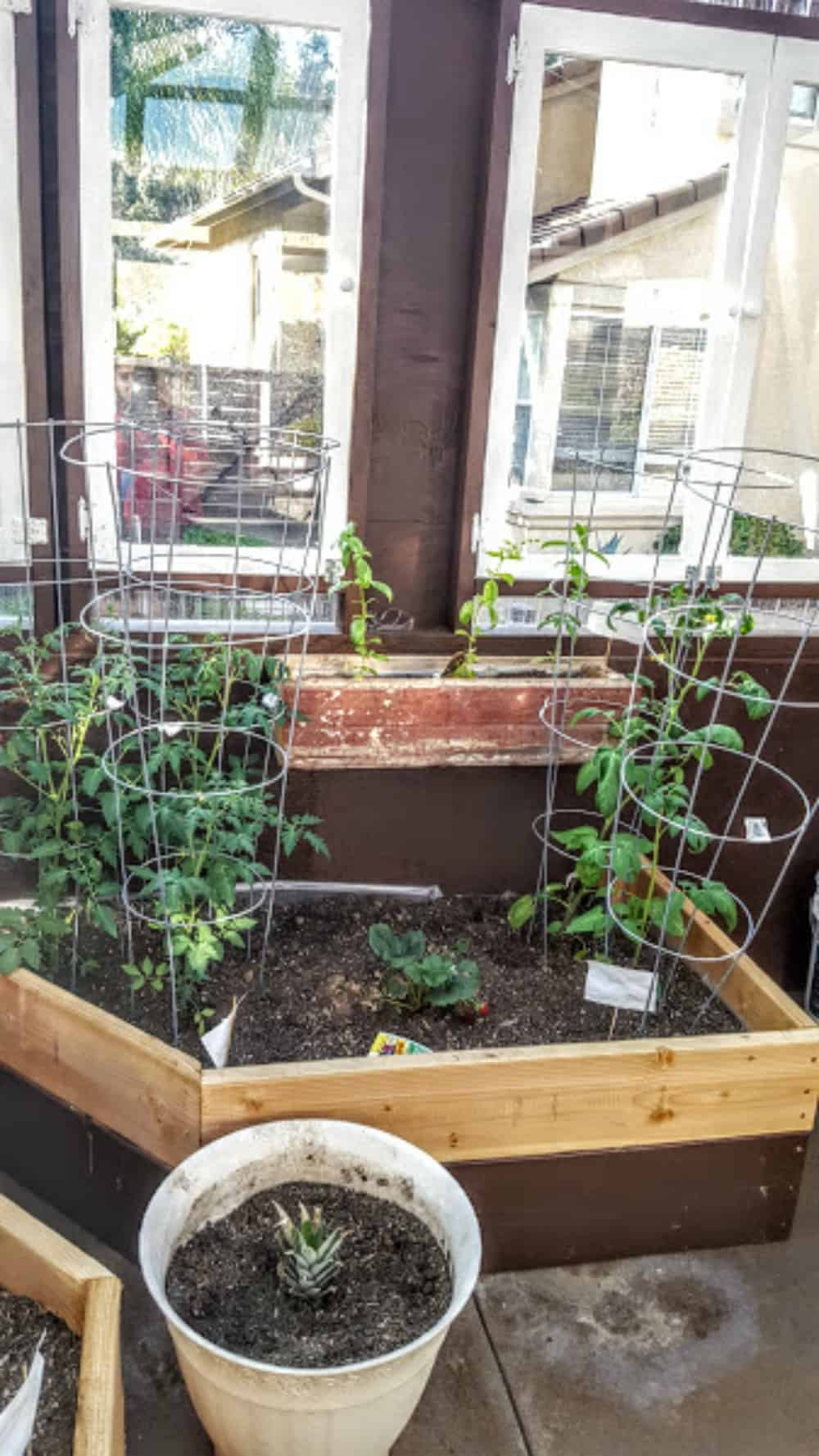 diy greenhouse shaws simple swaps