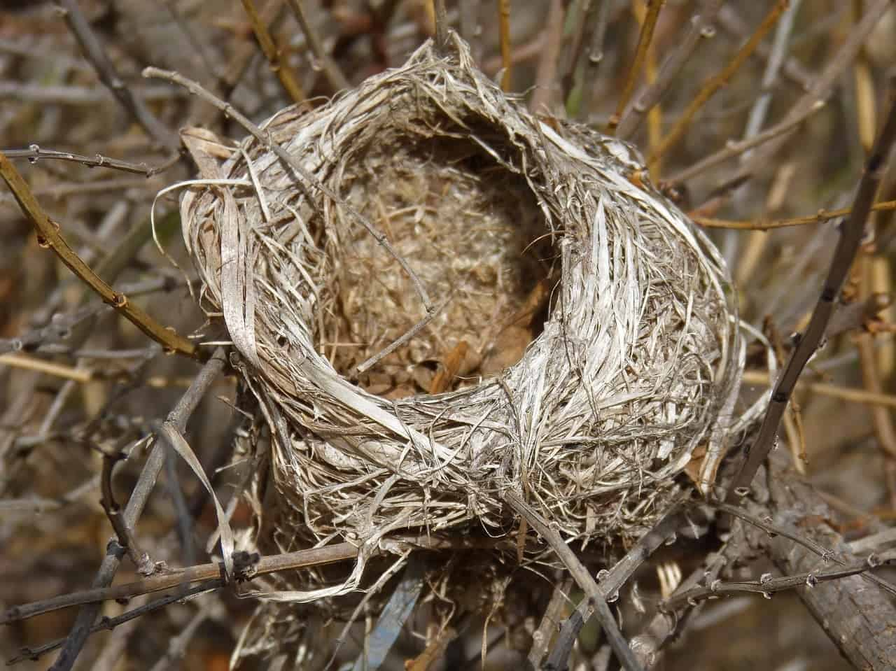 An Empty Nest - Facing a failed IVF cycle @bumpstobaby