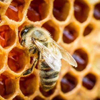 The Last Bee in the Hive – Operation Bumble Bee